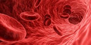 атеросклероза, високо кръвно налягане, гинко билоба, гроздово семе